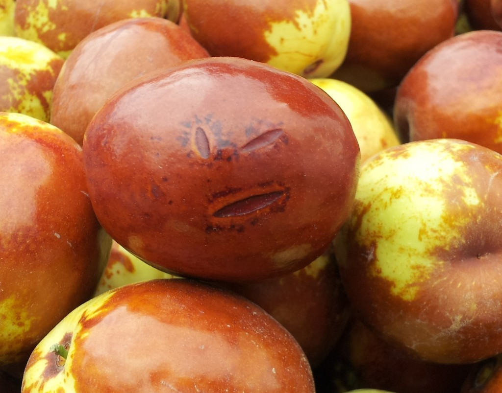 Finn the jujube fruit